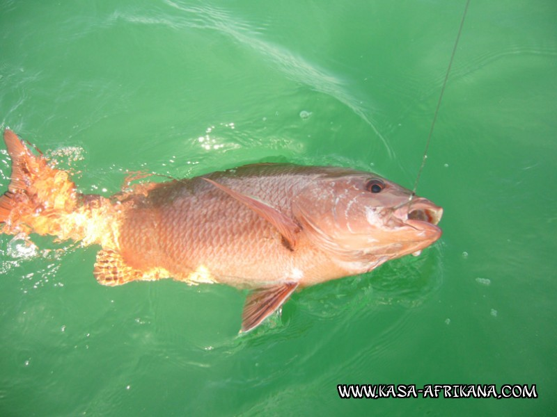 Photos Bijagos Island, Guinea Bissau : Fishes in the archipelago - African red snapper