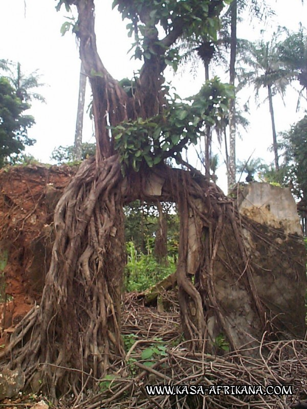 Photos Bijagos Island, Guinea Bissau : The hotel garden - Living sculpture