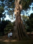 Photos of Bijagos Islands in Guinea Bissau : Kapok tree